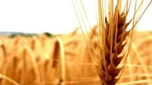 Tarım Çiftçi Kredisi Veren Bankalar