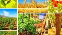 Tarımsal Yatırım ve Çiftçiye Devlet Teşviki | Çiftçi Kredisi