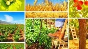 Tarımsal Yatırım Kredisi ve Çiftçiye Devlet Teşviki