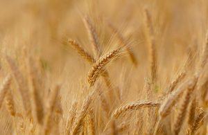 Tarım Kredisi Nisan